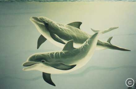 Dolphins Hand painted mural, Mural Mural On The Wall, Inc.