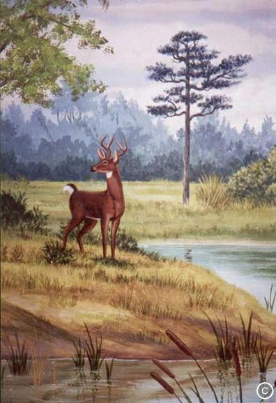 Florida Deer School Mural, Mural Mural On The Wall Inc.